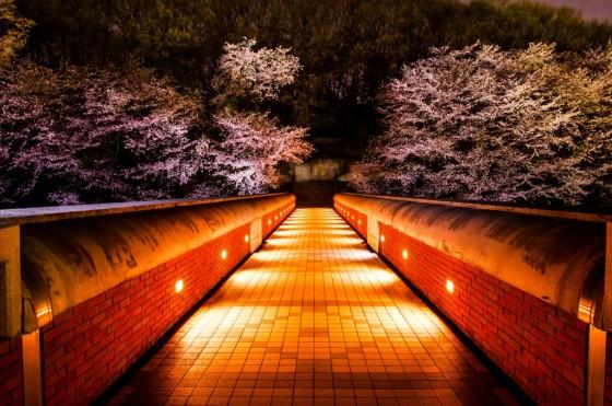 2.まちなか 藤澤豊「輝き橋」